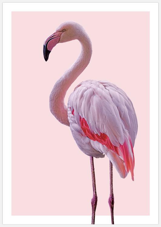 Pink Flamingo 2 flip