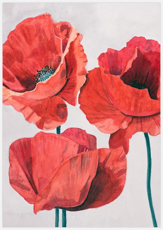 Painted Poppy 2