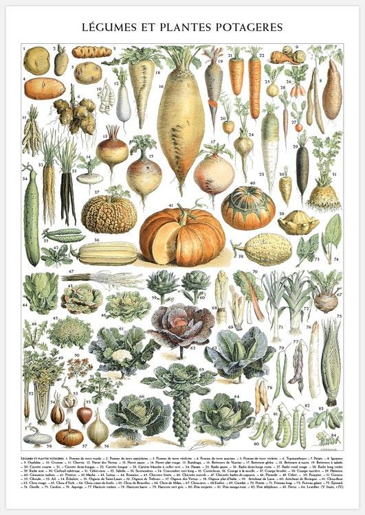 Vintage Vegetable Chart