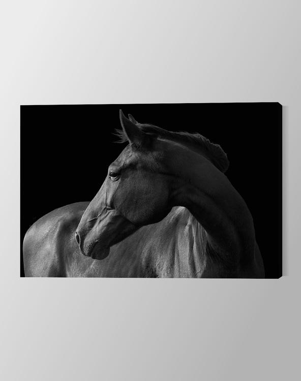 Horse black & white on Canvas