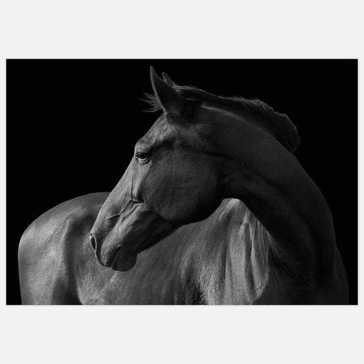 Horse black & white