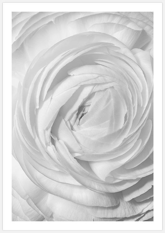 Tavelvägg White Flowers