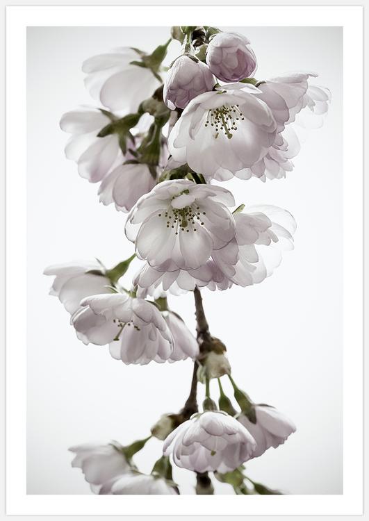 Gallery Wall: Cherry Blossom