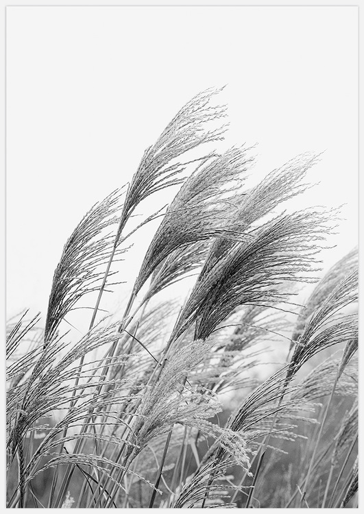 Reeds in Black & White