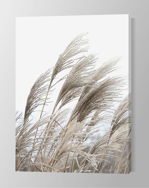 Reeds Canvas
