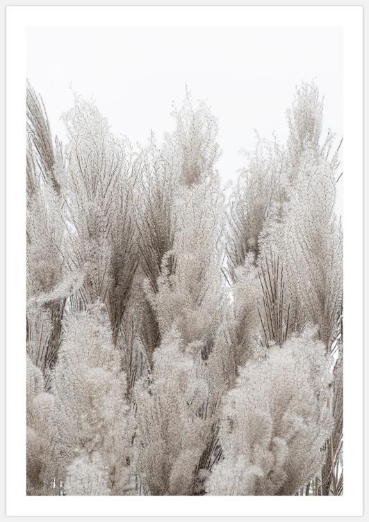 Reeds 2