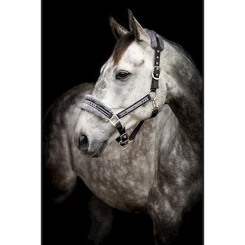 Grimma Horse Unique svart