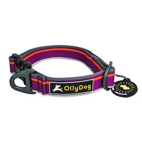 OllyDog Urban Trail Reflective Collar