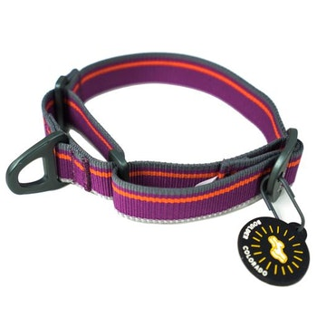 OllyDog Urban Trail Reflective Collar