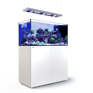 Red Sea Reefer Peninsula med belysning Hydra 26 HD+skena+vajerset