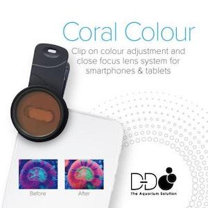 D&D Coral Colour Lens