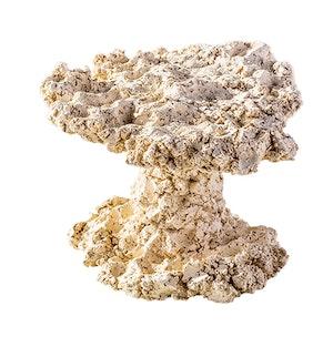 ARKA Biotechnologie Mushroom