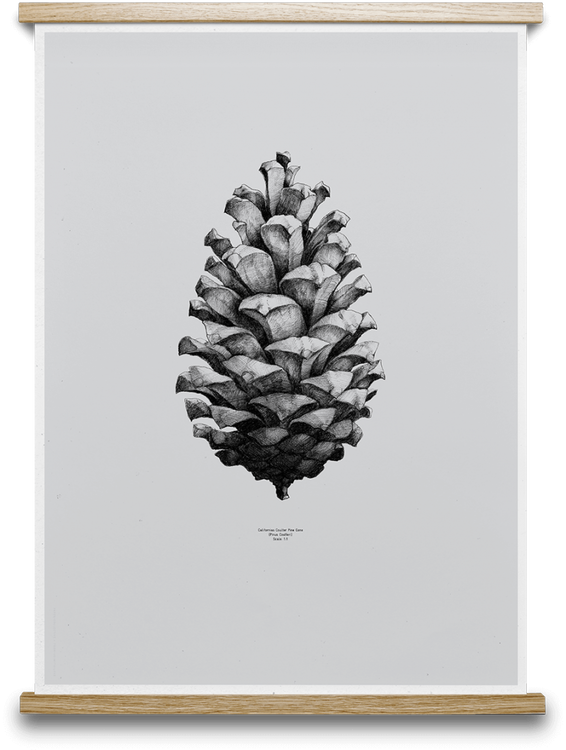 Paper Collective Pine Cone Poster 50x70 GRÅ