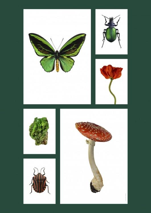 Macro Photpgraphy Amanita muscaria 30x40cm