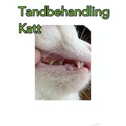 Tandbehandling Katt Underhåll