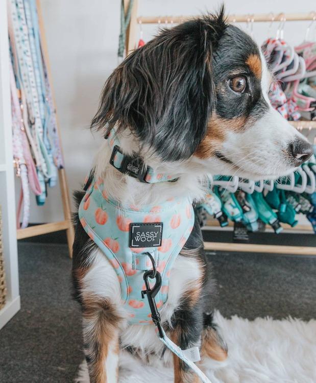Peach, Please' Dog Collar
