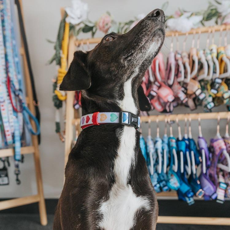 Love is Love' Dog Collar