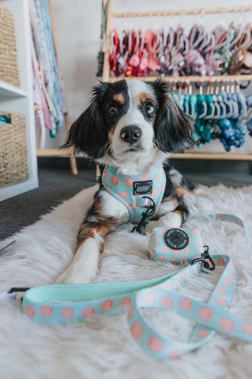 Peach, Please' Dog Fabric Leash