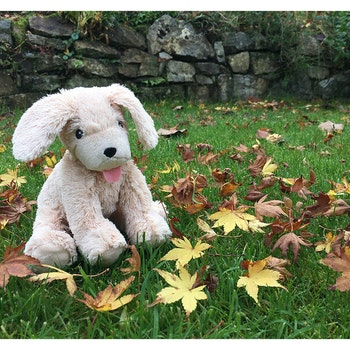 Presentask Puppy