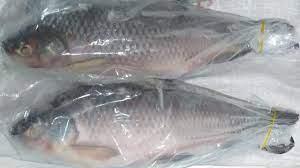 Rohu FISK  Hel Dayseaday 2kg
