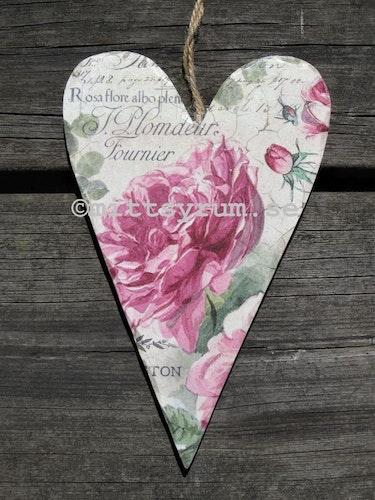 Trähjärta Old English rose