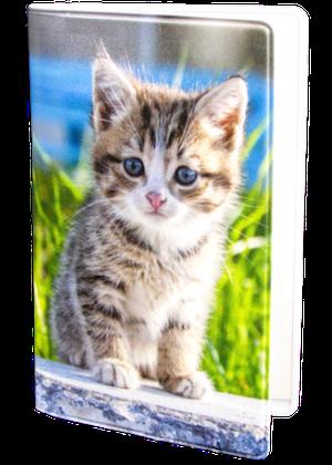 Kattunge på sten