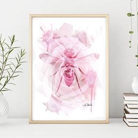 Poster: Insekt på ros Akvarell