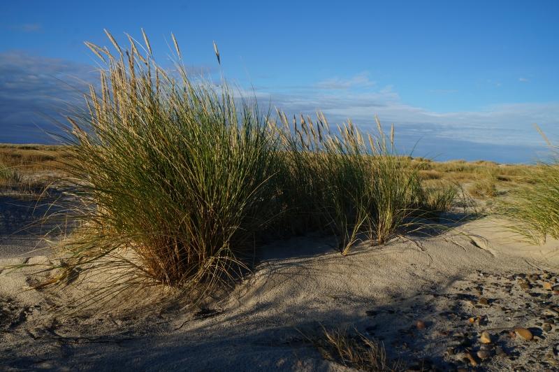 Ansöka om strandskyddsdispens :: STRANDSKYDDSAKADEMIN