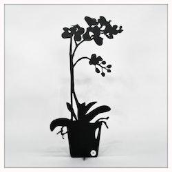 Orkidé - ETERNITY