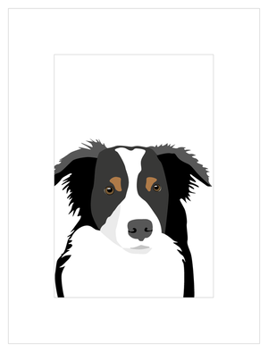 Poster Border Collie
