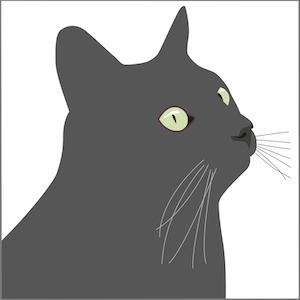 Kort Svarta Katten