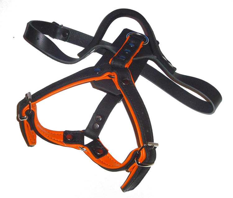 K9-Sport Lädersele, orange