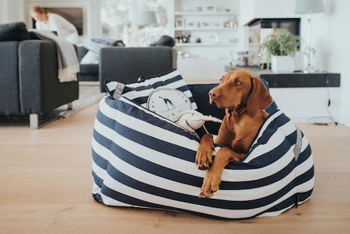 HUNTER Hundbädd Binz Blå/Vit