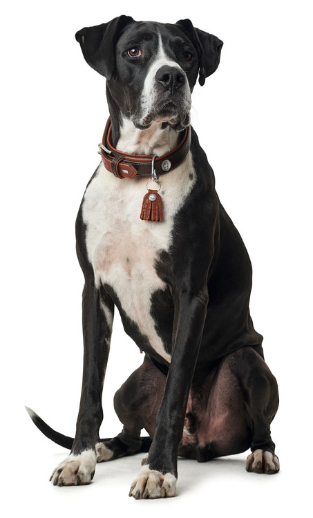 HUNTER Cody Special Hundhalsband Mörkbrun/Cognac