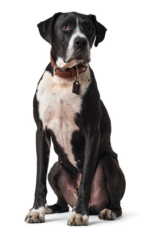 HUNTER Cody Classic Hundhalsband Cognac/Mörkbrun