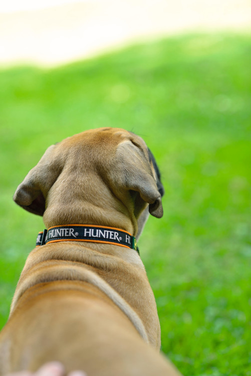 HUNTER Hundhalsband Oakland Neopren Reflex Orange/Svart