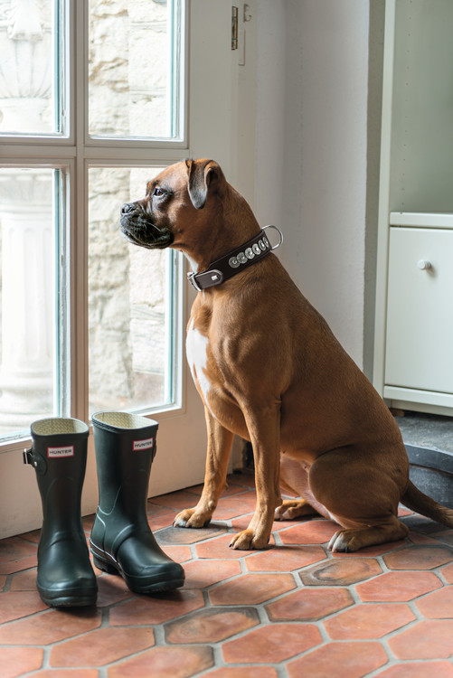 HUNTER Hundhalsband Rom Brun Läder