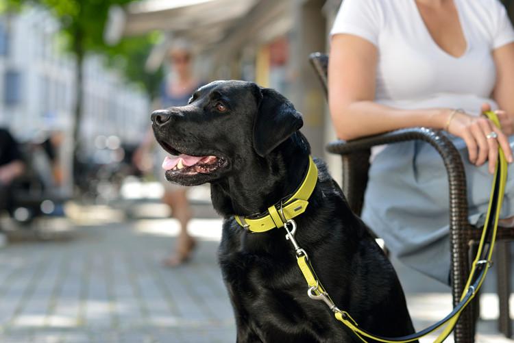 HUNTER Hundhalsband Capri Classic Nappaläder Lindblomsgrön