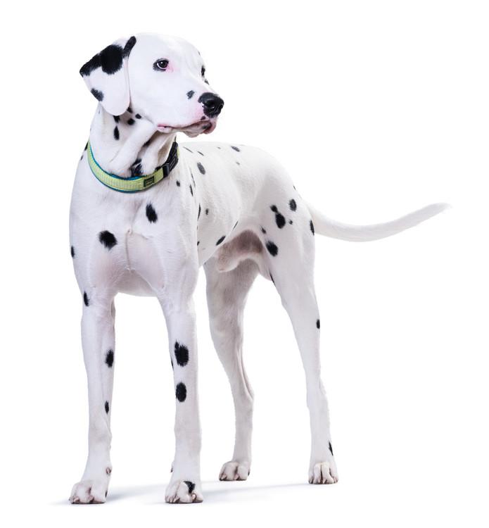 HUNTER Hundhalsband Neopren Vario Plus Ljusgrön/Petrol