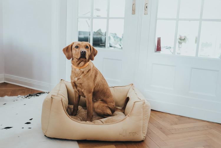 HUNTER Sanremo Hundbädd Beige