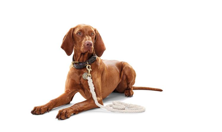 HUNTER Hundhalsband List Vit/Messing