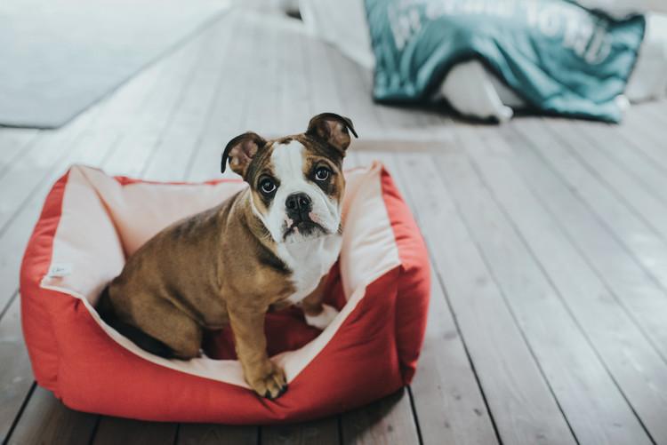 HUNTER Keitum Hundbädd Röd/Ljusrosa