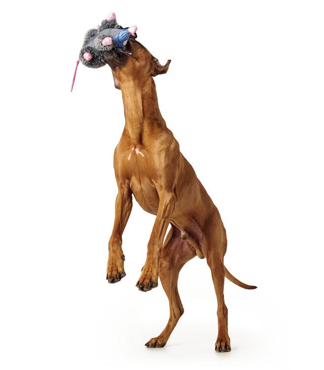 HUNTER Broome Hundleksak Råtta