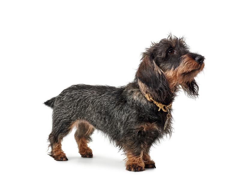 HUNTER List Hundhalsband Natur/Messing