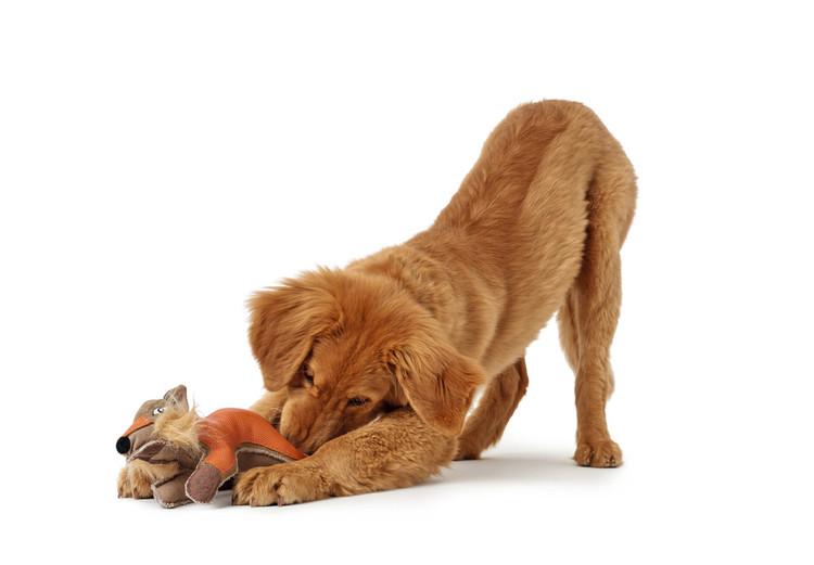 HUNTER Tough Tambo Hundleksak med pip Räv