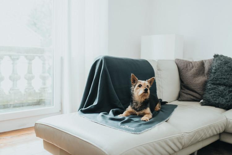 HUNTER Casper Hundfilt/Pläd