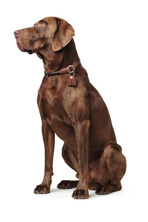 HUNTER Cody Dressyr Hundhalsband Mörkbrun