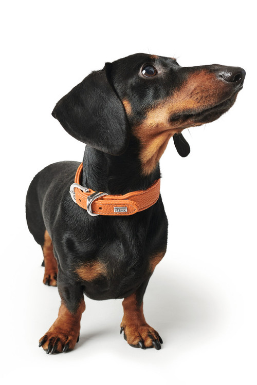 HUNTER Cannes Mini Hundhalsband Kalvläder Orange