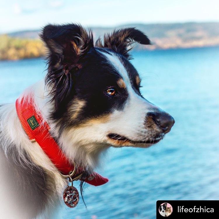 HUNTER Hundhalsband Neopren Reflex Röd