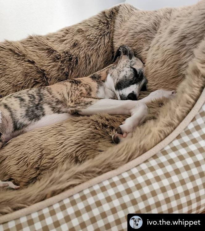 HUNTER Astana Hundbädd Beige